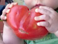 Diese Tomate ist groooß!!!!