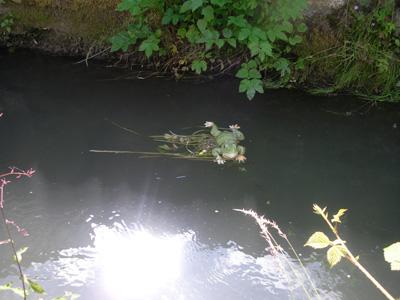 Blog Frog?