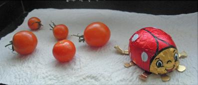 Letzte Tomatenausbeute