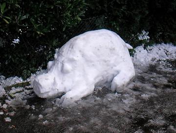 Wildes Schneeschwein