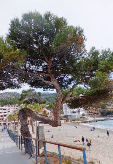 Sabine_Mallorca