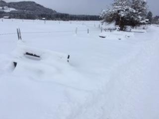sabine_winter_2
